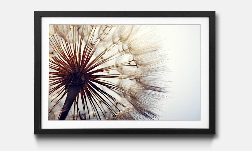 Kunstdruck gerahmt: Big Dandelion