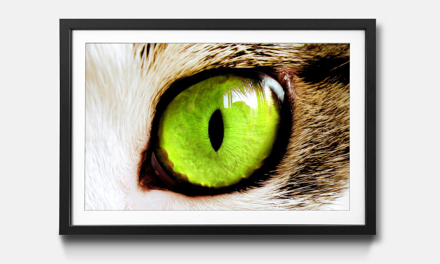 Kunstdruck gerahmt: Cats Eye Green