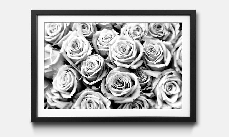 Kunstdruck gerahmt: Creamy Roses