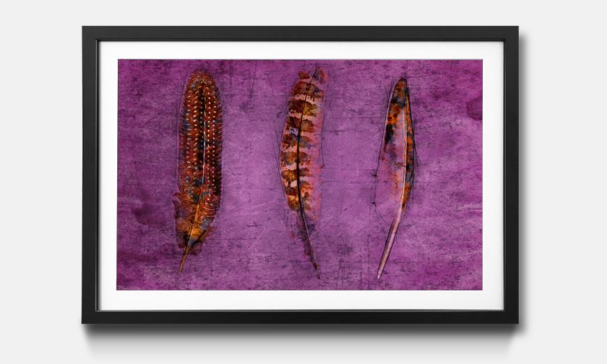 Kunstdruck gerahmt: Feathers and Purple