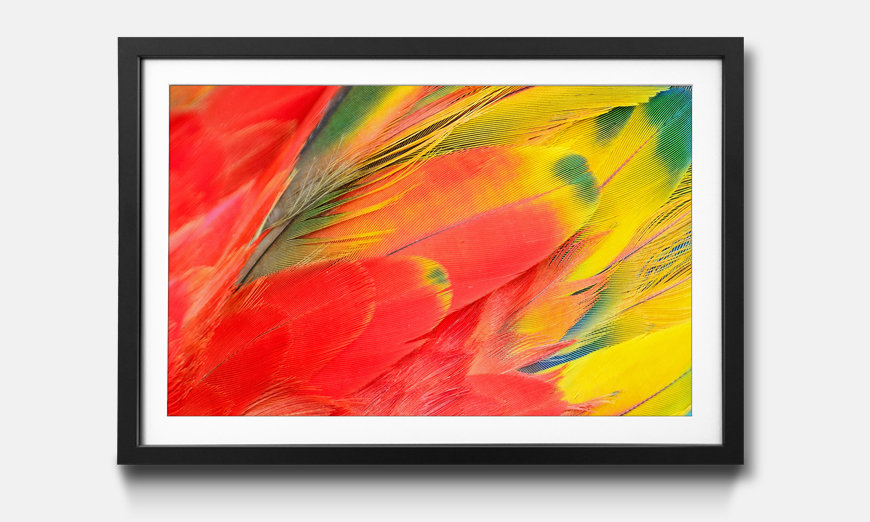 Kunstdruck gerahmt: Scarlet Macaw