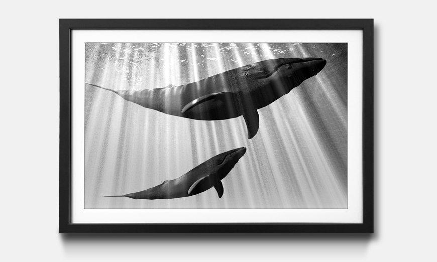 Kunstdruck gerahmt: Whales