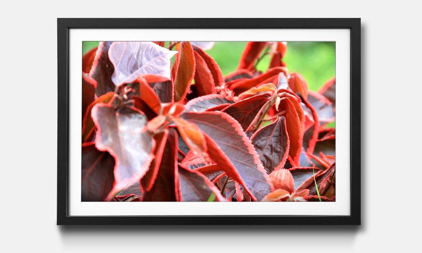 Wandbild gerahmt: Beauty Plant