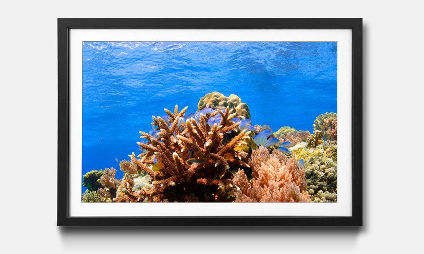 Wandbild gerahmt: Corals Reef