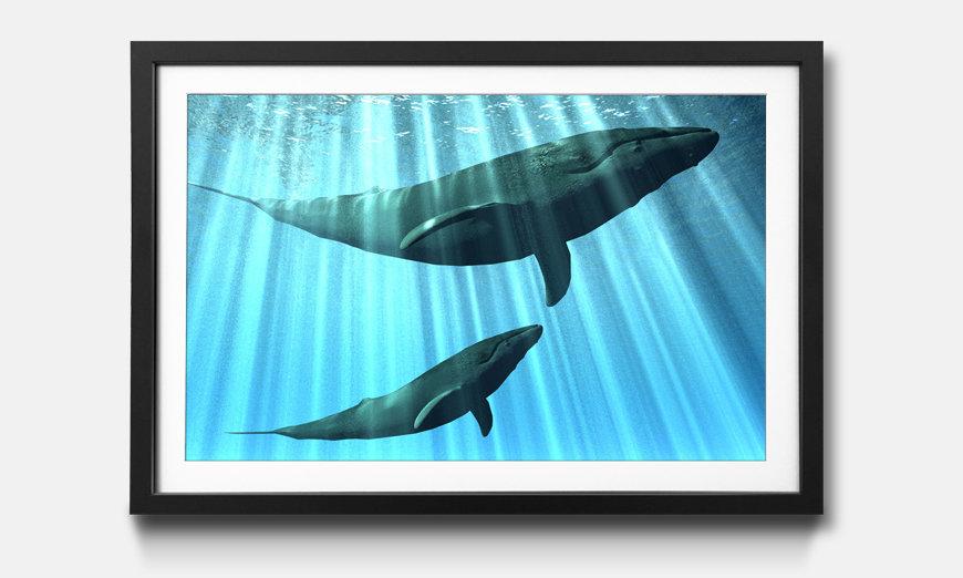 Wandbild gerahmt: Whales