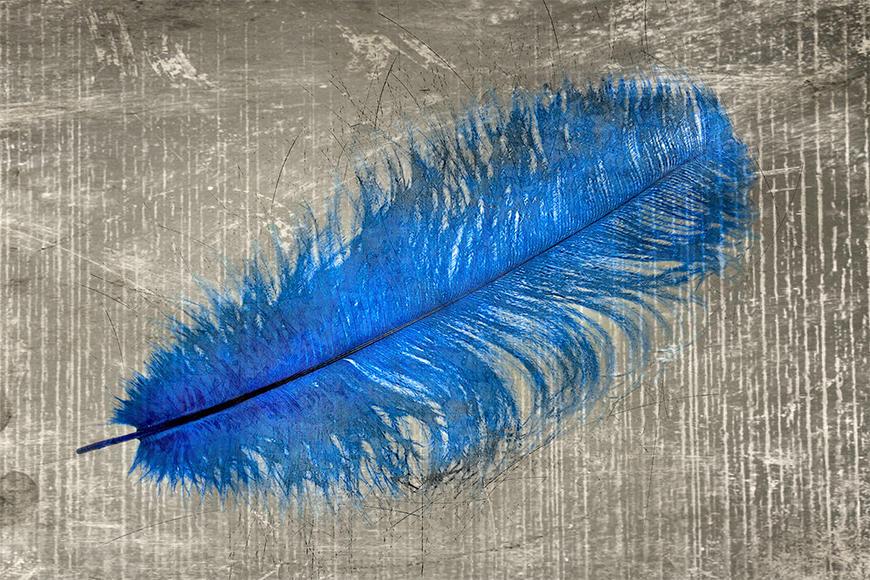 Die Fototapete Feather In Blue