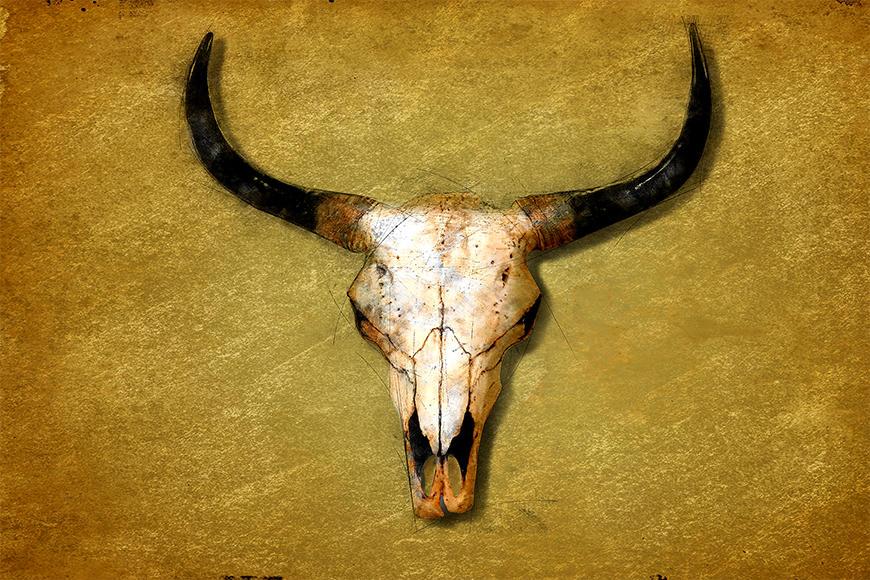 Die Vlies Foto-Tapete The Bull