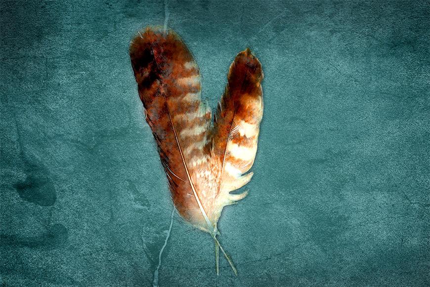 Die Vlies Fototapete Two Feathers