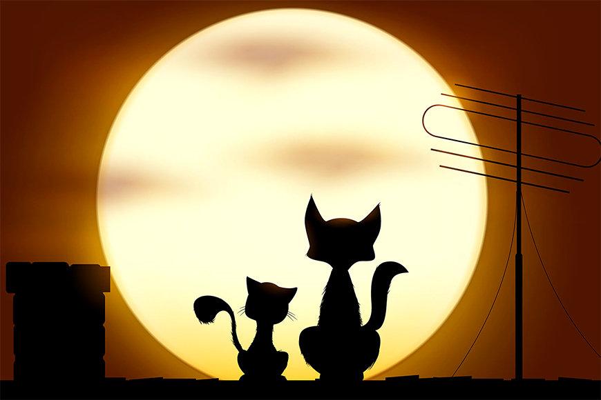 Die Vliestapete Romantic Cats