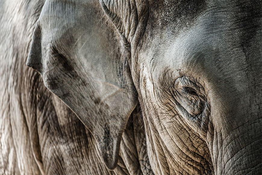 Fototapete Elefantenhaut ab 120x80cm