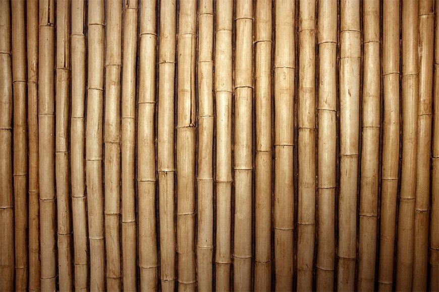 Naturmotiv als Tapete: Bambus in S bis XXL