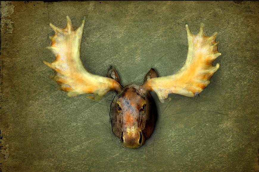Unsere hochwertige Vliestapete The Elk
