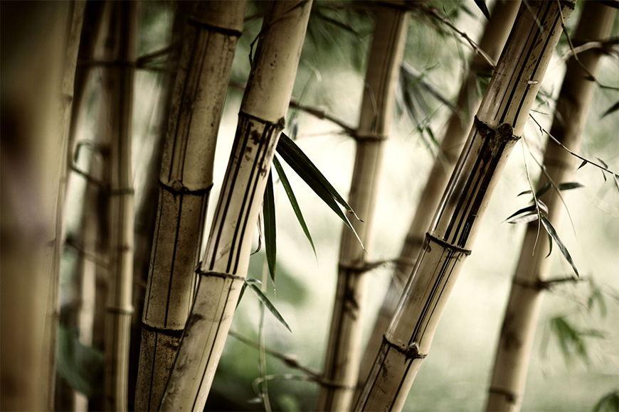 Vlies Fototapete Bamboo ab 120x80cm