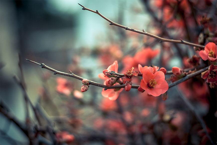 Vliestapete Pinke Blüte ab 120x80cm
